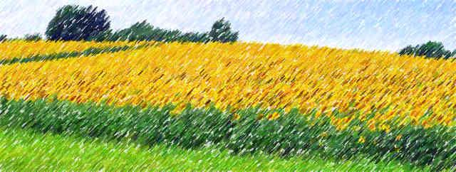 Sonne, Sonnenblume, Himmel, Leben, Glück